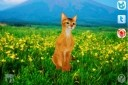 Abyssinian Petting Cat 3D REAL Lite