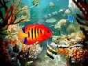 Tropical Fish 3D Photo Screensaver