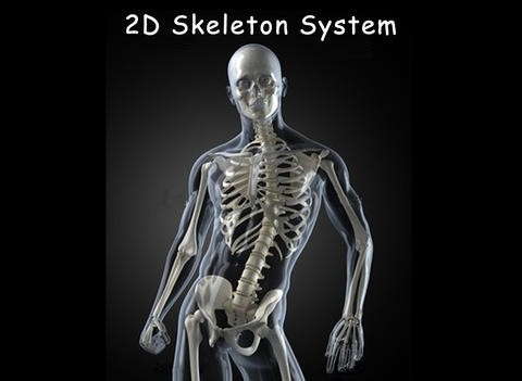 2D/3D Skeletal System for iPad Download