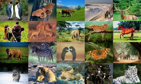 Animals Photo Screensaver Volume 1 Download