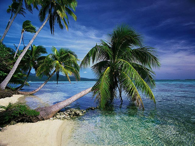 Enjoy tropical nature scenes such
