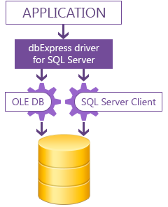 dbExpress driver for SQL Server Download