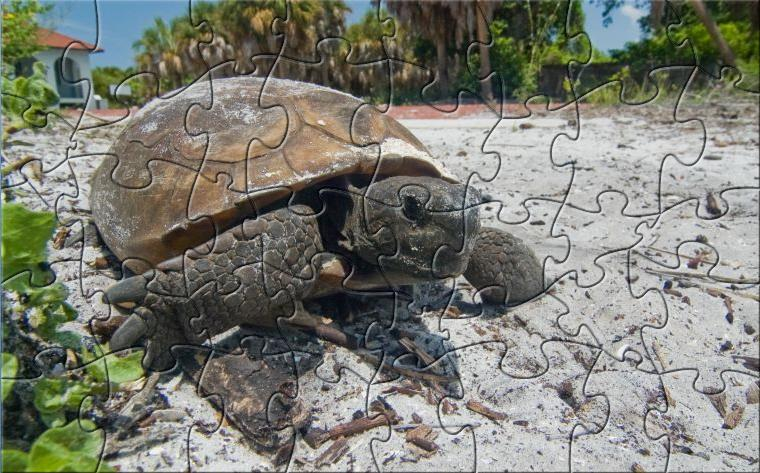 GGS Tortoise Puzzle Download