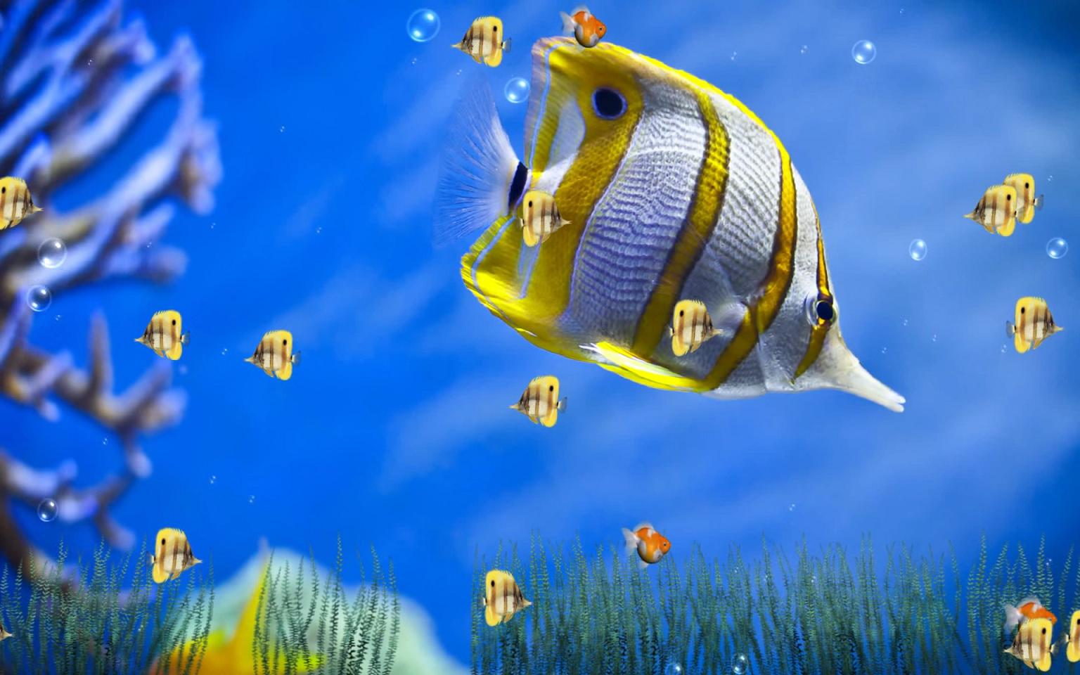 Marine life aquarium animated wallpaper download